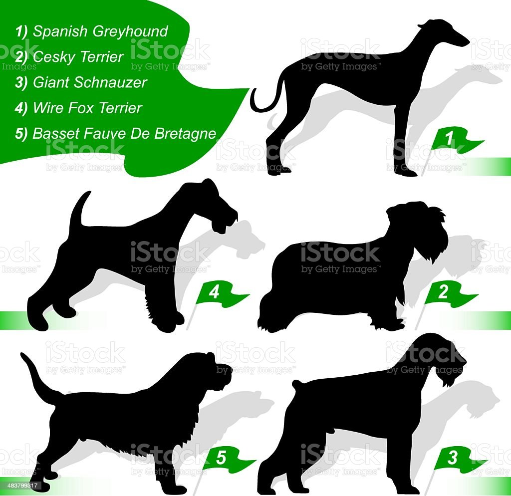 Dog show  (vector) vector art illustration