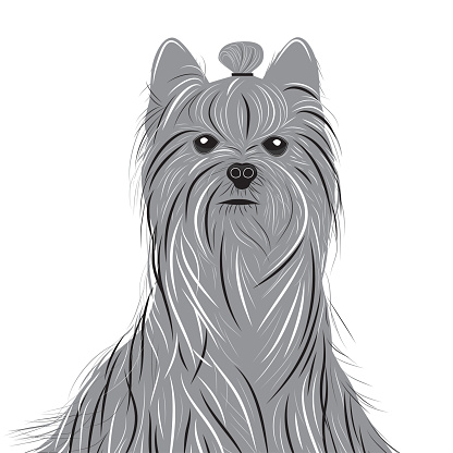 Drawing Of A Yorkie Puppy Haircut Clip Art Vector Images