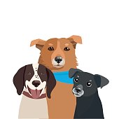Dogs Of Different Breeds Vector. Three Funny Dogs Illustration.
