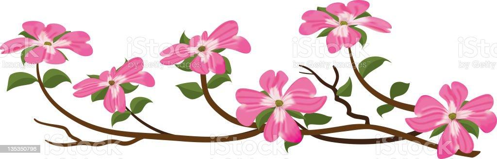 Dogwood Tree Branch, Pink Blossom royalty-free stock photo