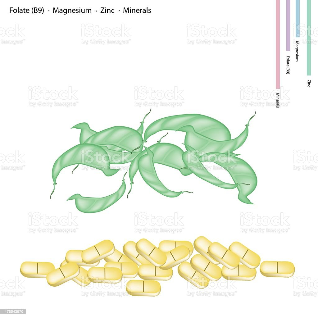 Dolichos Lablab Pods with Vitamin B9, Magnesium and Zinc vector art illustration