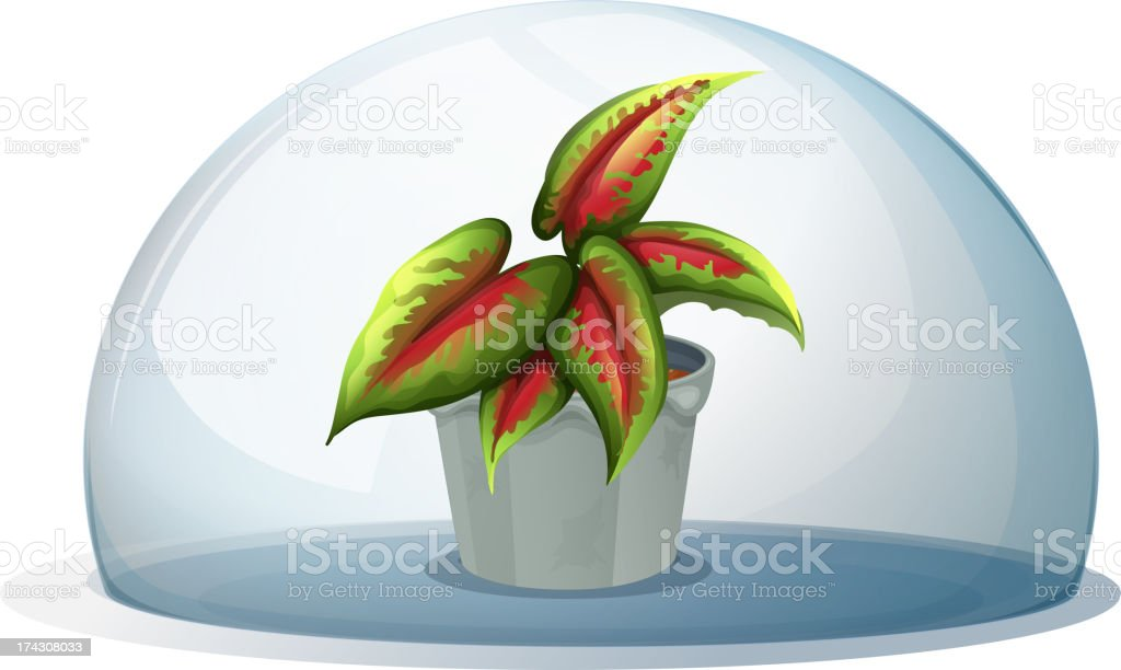 Dome with plant inside a gray pot royalty-free stock vector art