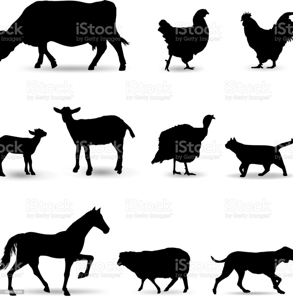Domestic Animals Silhouette vector art illustration