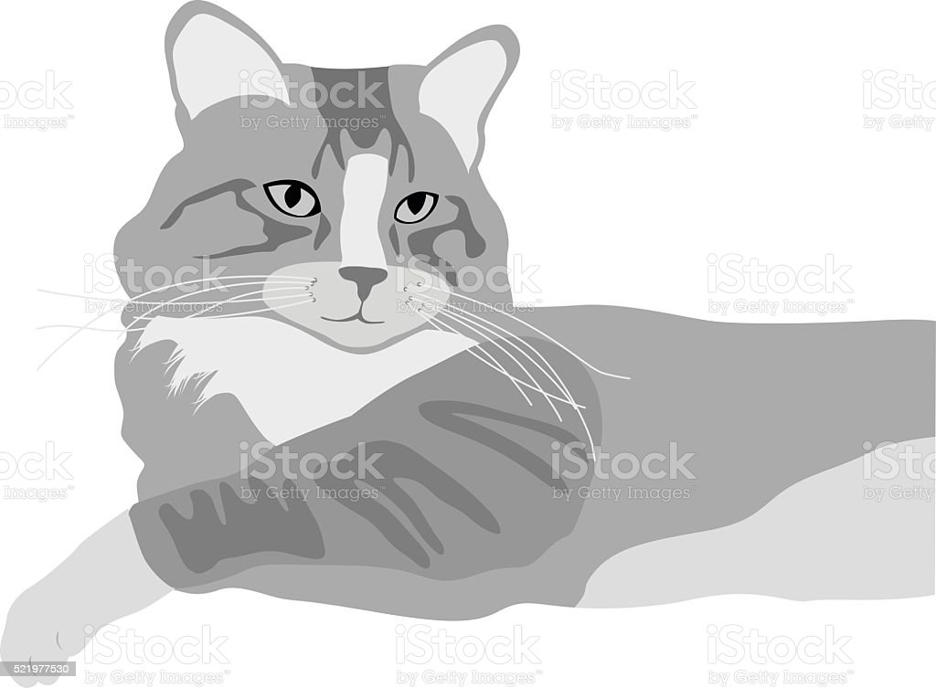 Domestic Cat vector art illustration