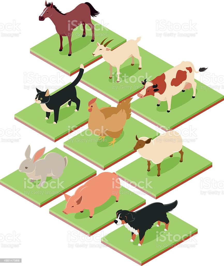 Domestic isometric animals vector art illustration