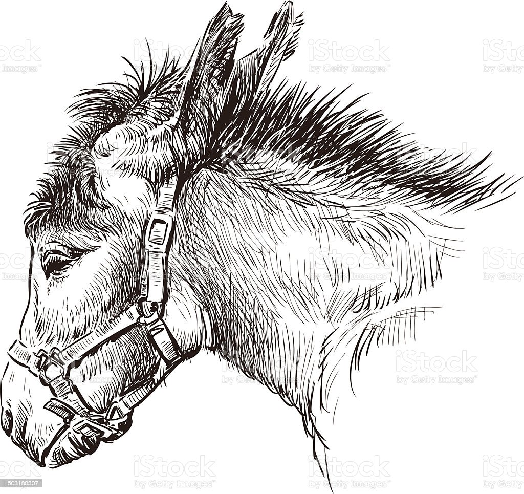donkey head vector art illustration