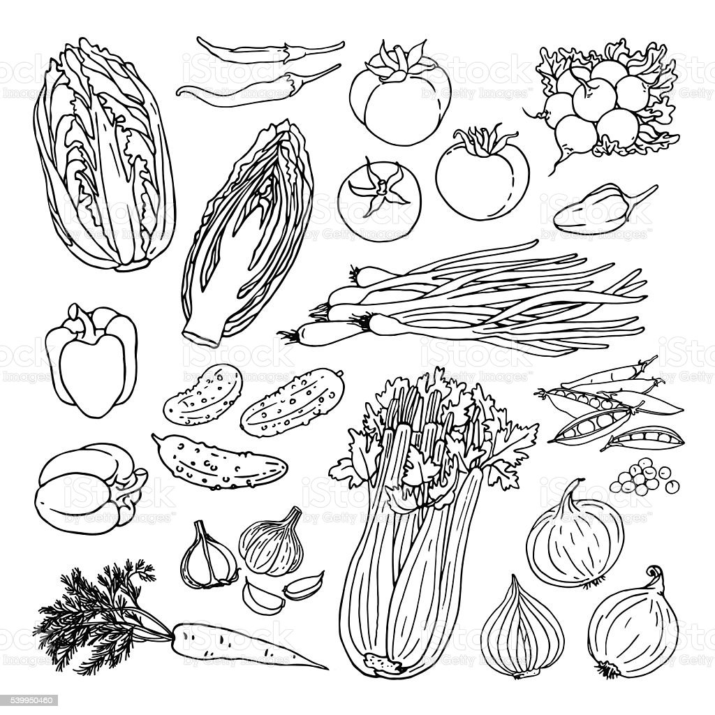 Doodle vegetables set with cabbage, carrot, cucumber, radish, tomato, graphic vector art illustration