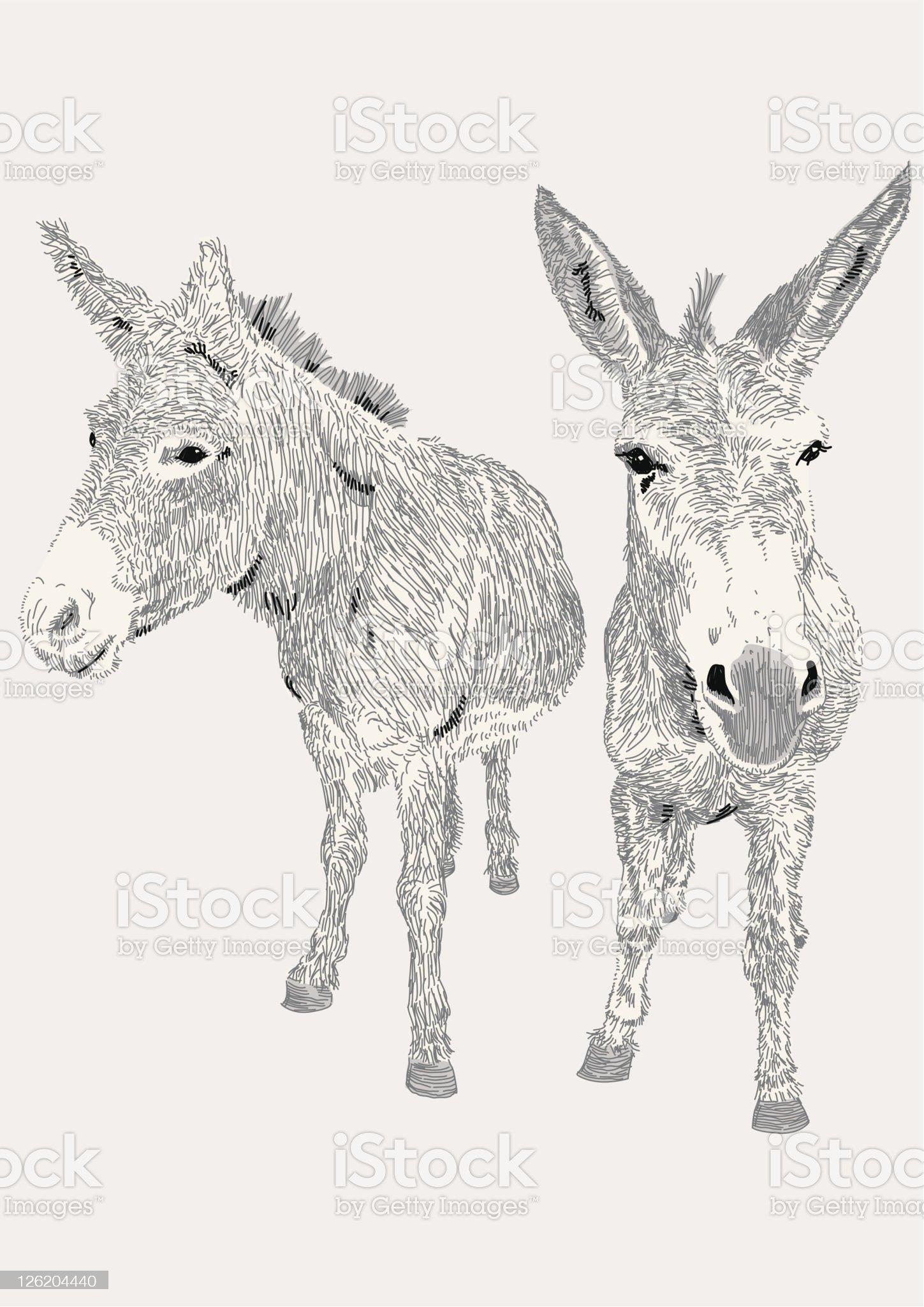 Dozy Donkeys royalty-free stock vector art