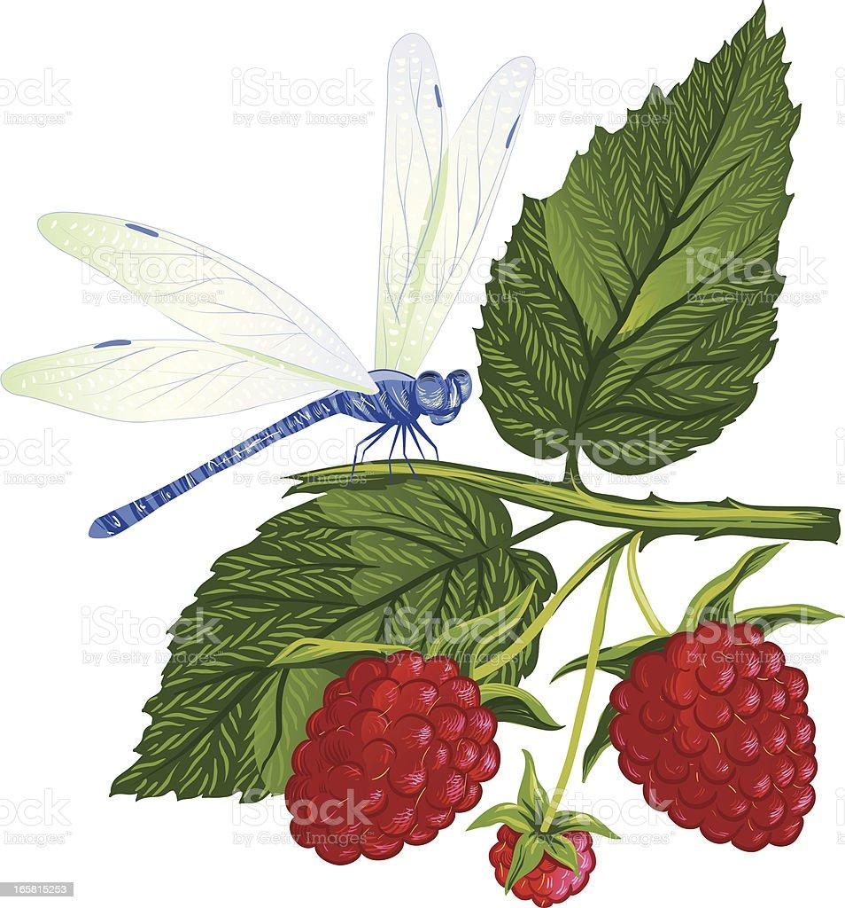 Dragonfly sitting on the raspberries. vector art illustration