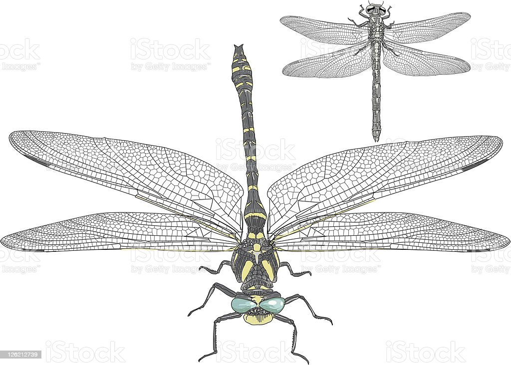 Dragonfly royalty-free stock vector art