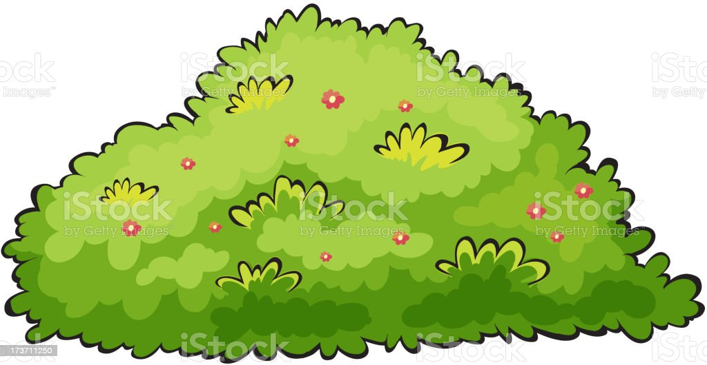Drawing of a flowery bush isolated on white vector art illustration