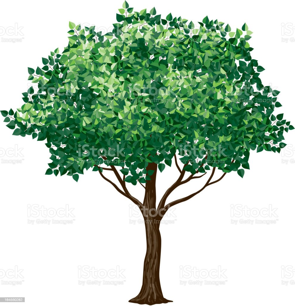 Drawing of a foliage tree on white background vector art illustration
