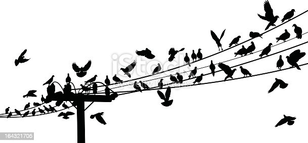 Drawing Of Birds On Telephone Wire stock vector art