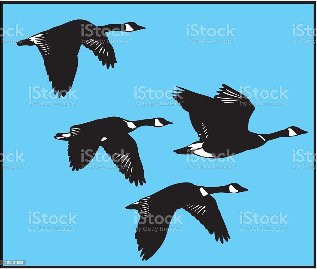 Drawing of four black flying swans in blue sky vector art illustration
