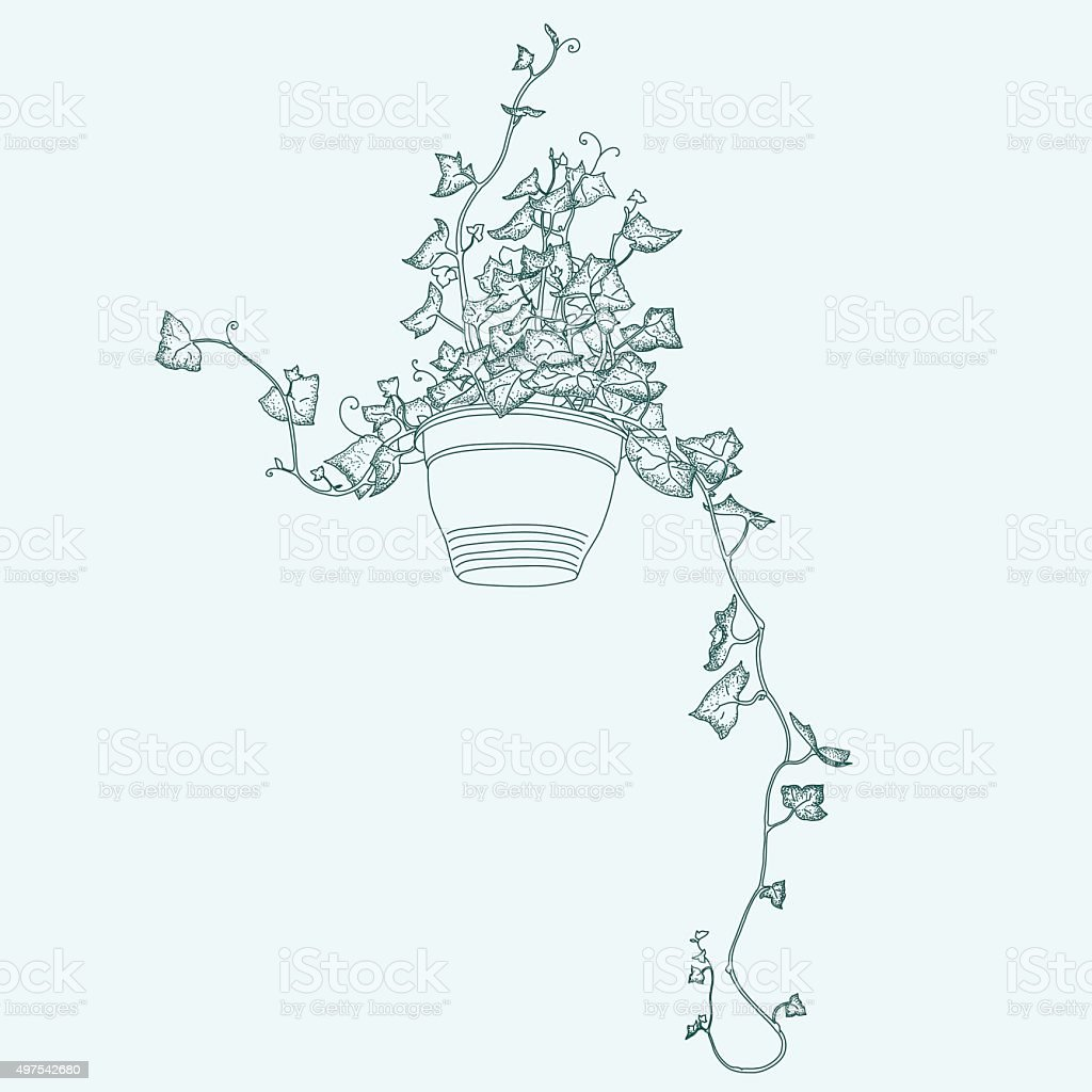 Drawing of green ivy in flowerpot. Abstract vector clipart. vector art illustration