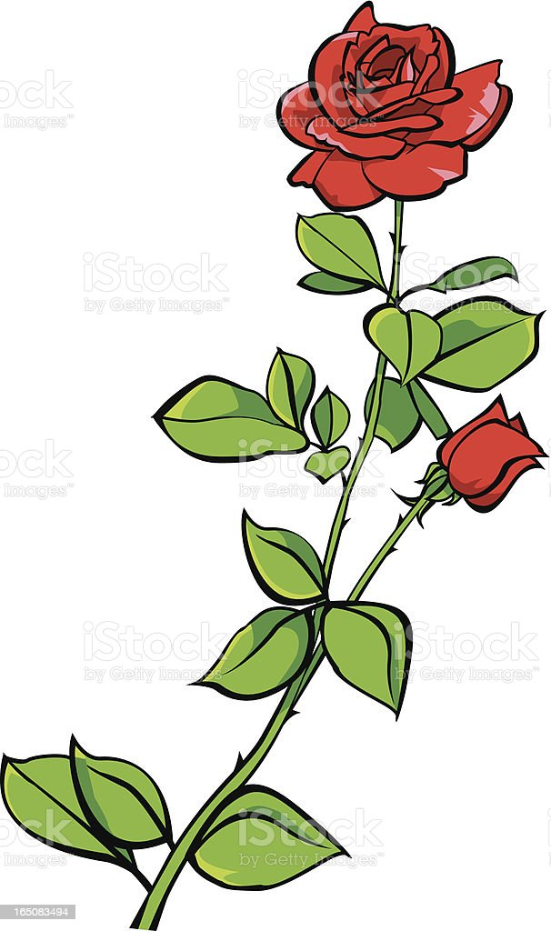 Drawing Of Long Stemmed Red Rose stock vector art 165083494 | iStock