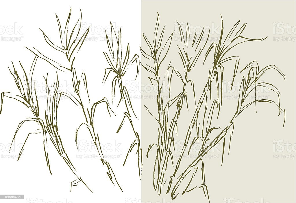 Drawing of sugar cane on white and rice color royalty-free stock vector art