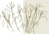 Drawing of sugar cane on white and rice color