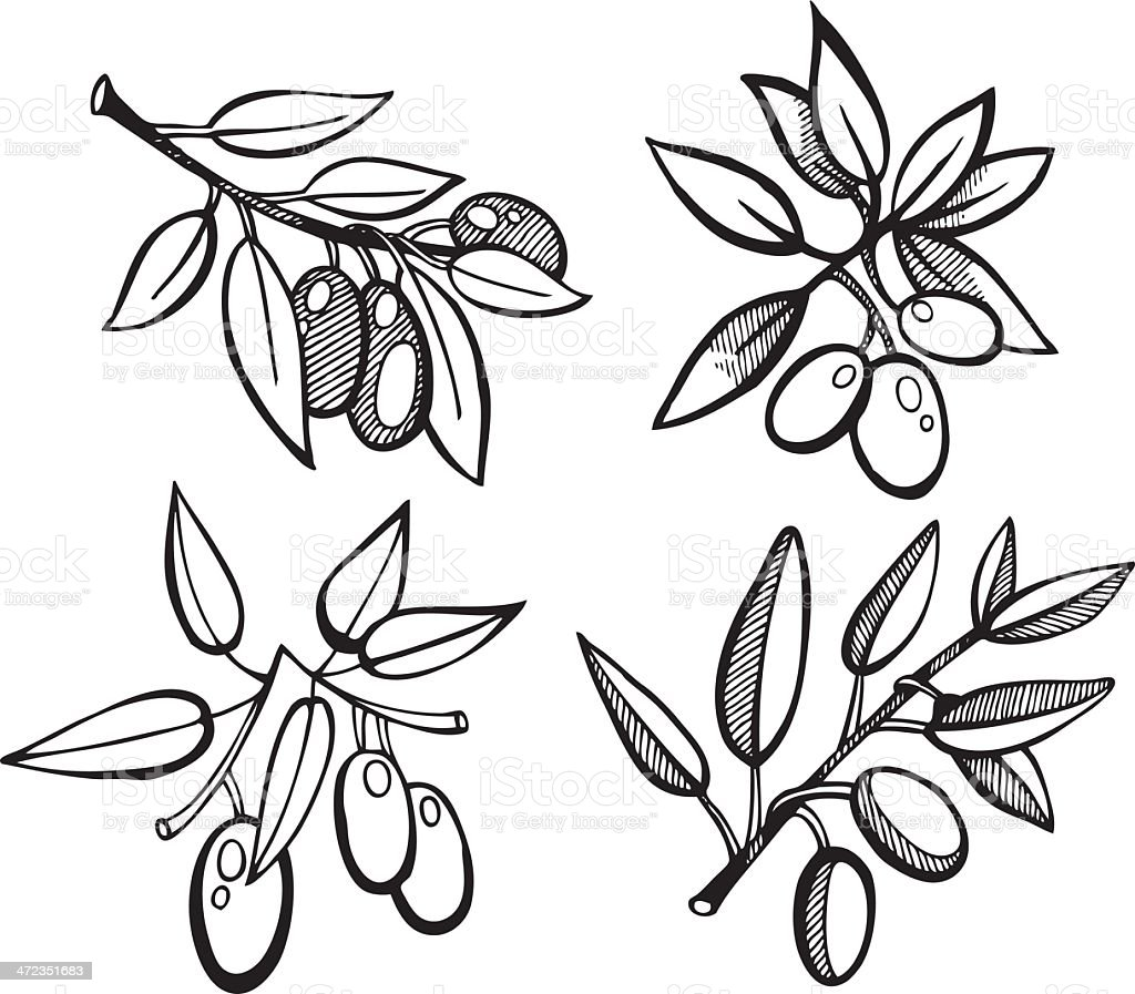 Drawing Olives set royalty-free stock vector art