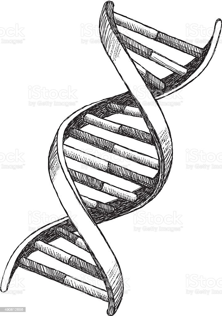 DNA Drawing vector art illustration
