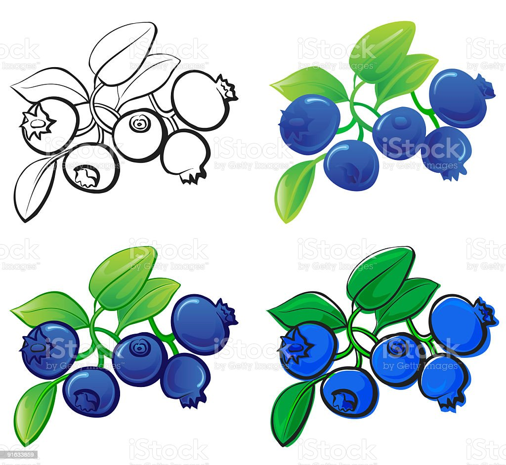Drawings and watercolors of blueberries royalty-free stock vector art