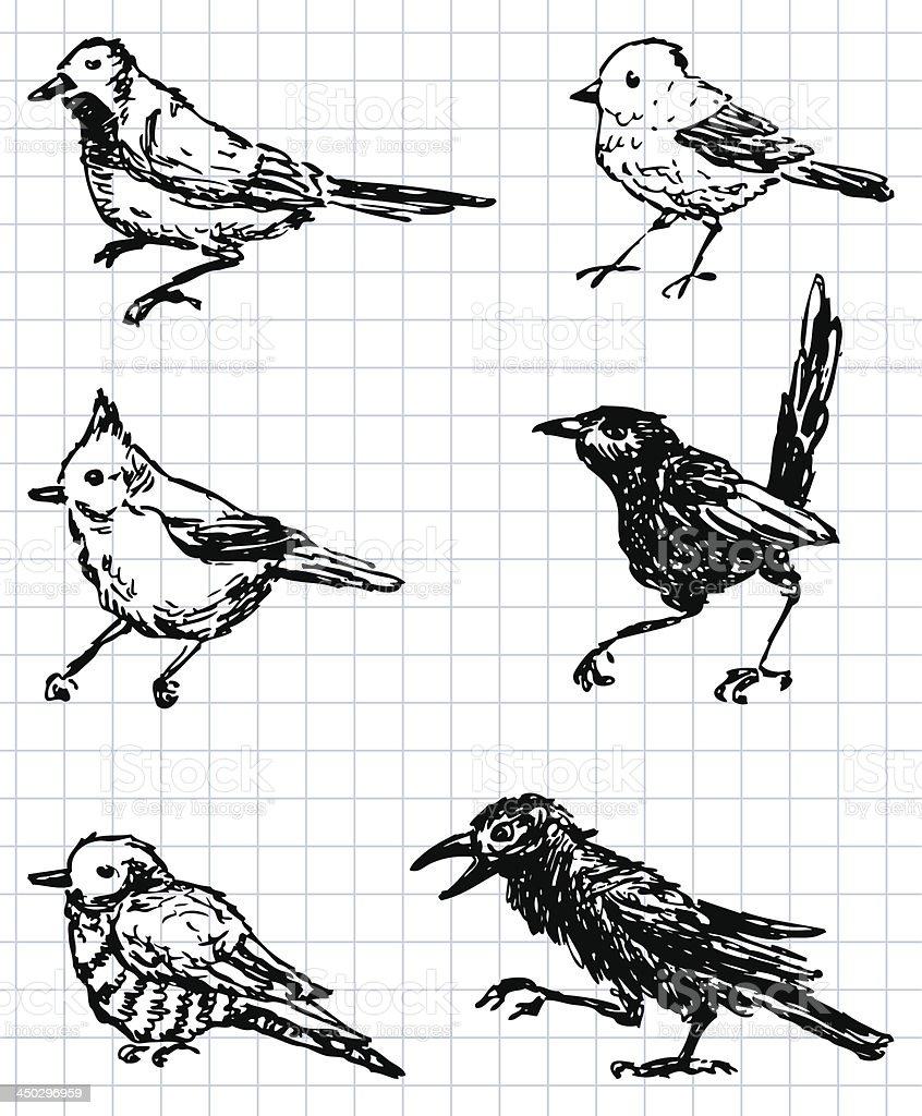 drawn birds royalty-free stock vector art
