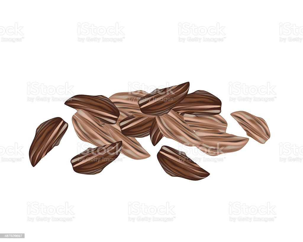Dried Cardamom Pods on A White Background vector art illustration