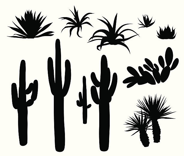 Cactus Clip Art, Vector Images & Illustrations - iStock