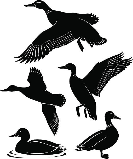 goose hunting clipart - photo #34