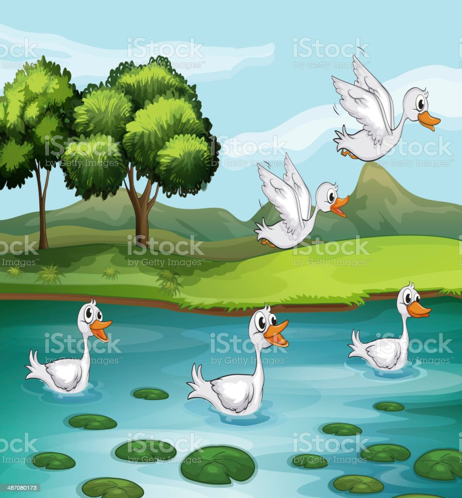 Ducks and water royalty-free stock vector art
