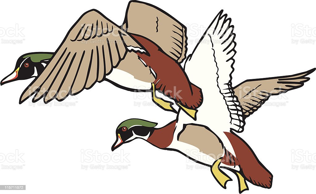 Ducks in flight royalty-free stock vector art