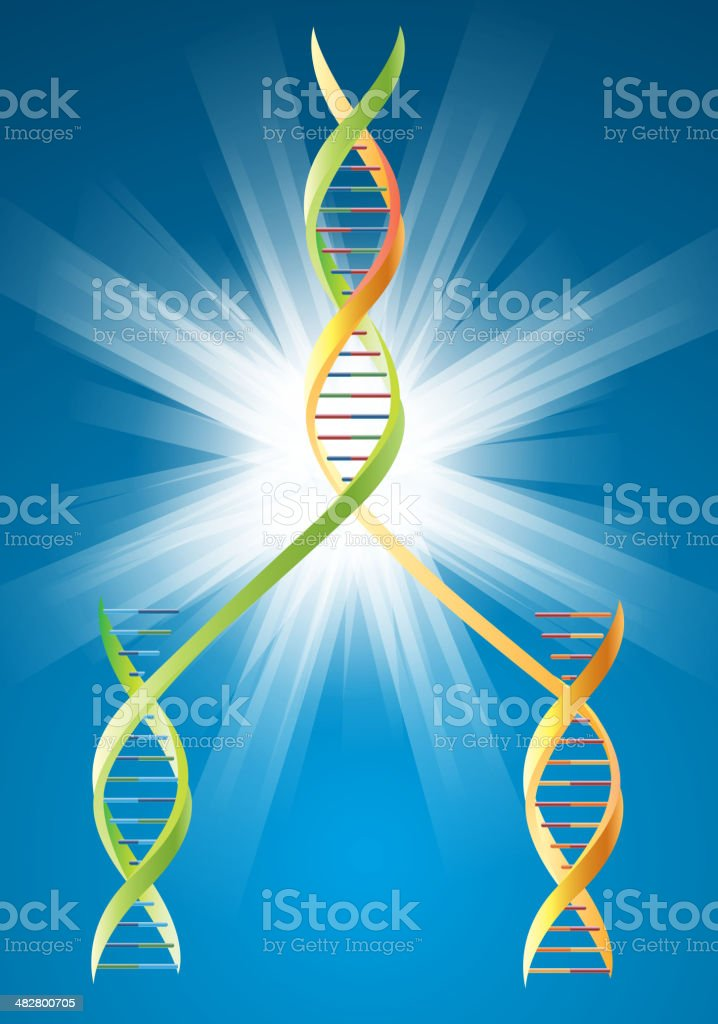 DNA duplication royalty-free stock vector art