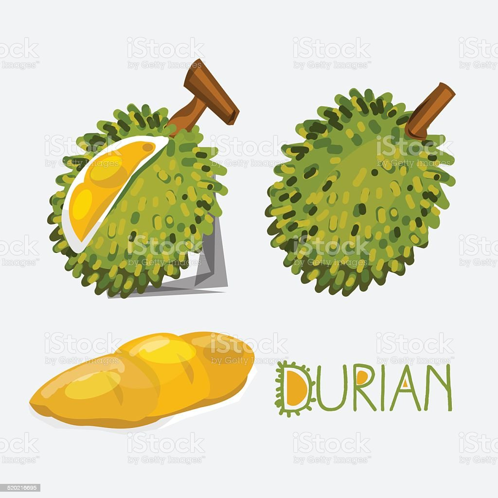 durian- vector illustration vector art illustration