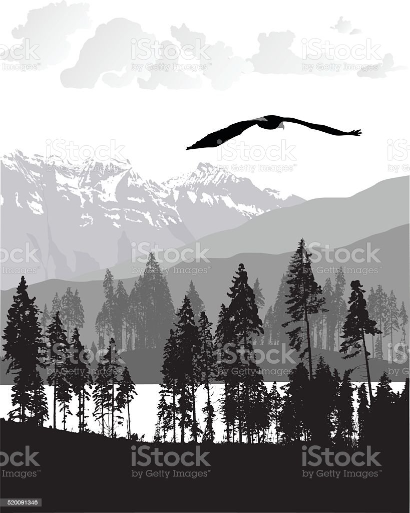 Eagle Flight vector art illustration