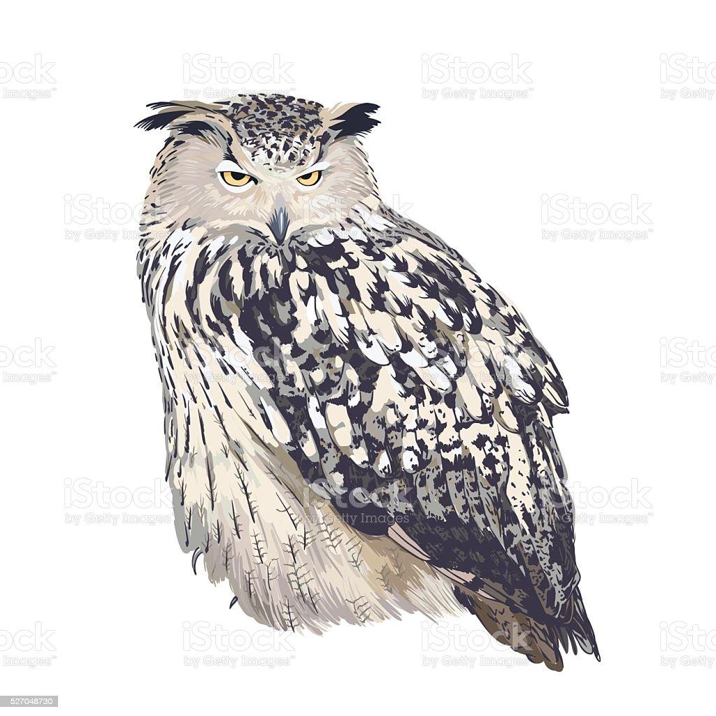 Eagle owl (bubo bubo) on white background vector art illustration