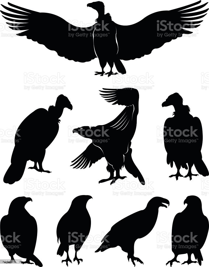 eagle silhouettes royalty-free stock vector art