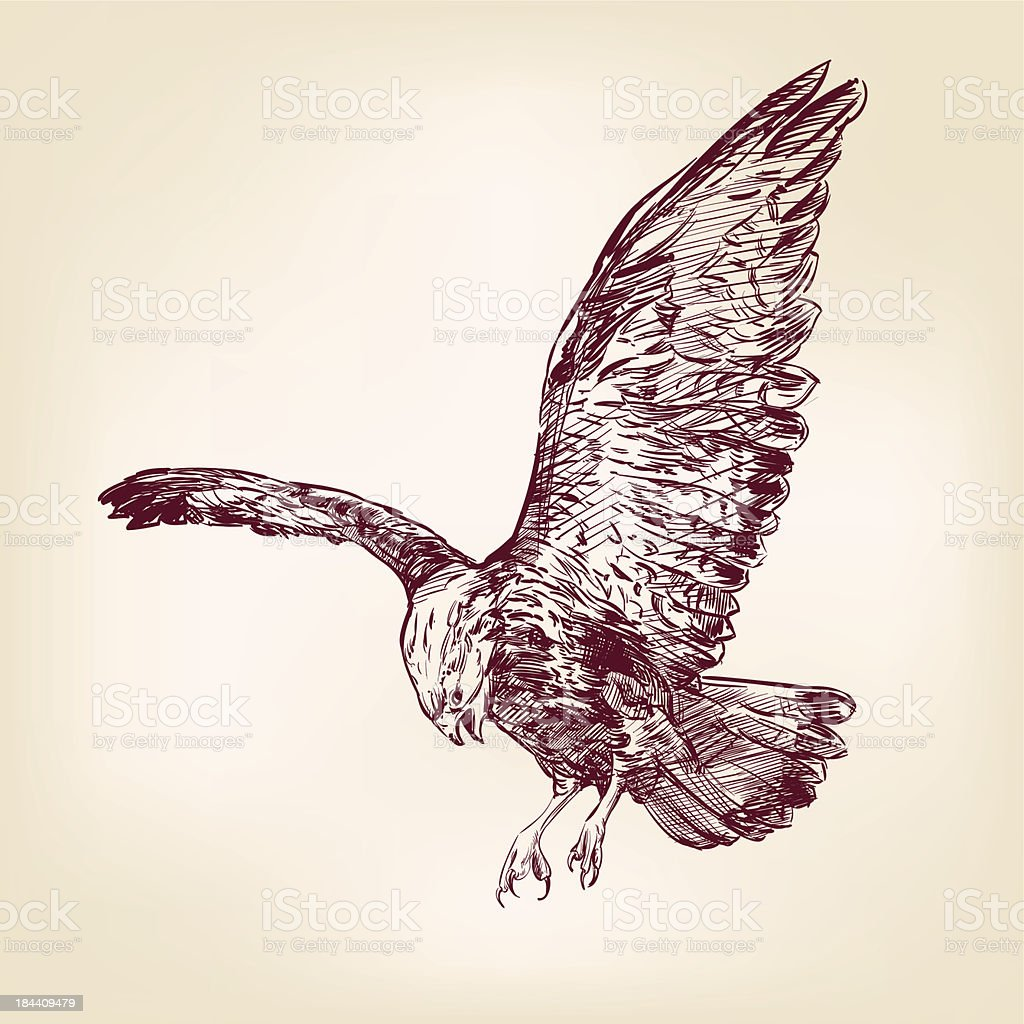 Eagle - vector illustration hand drawn royalty-free stock vector art