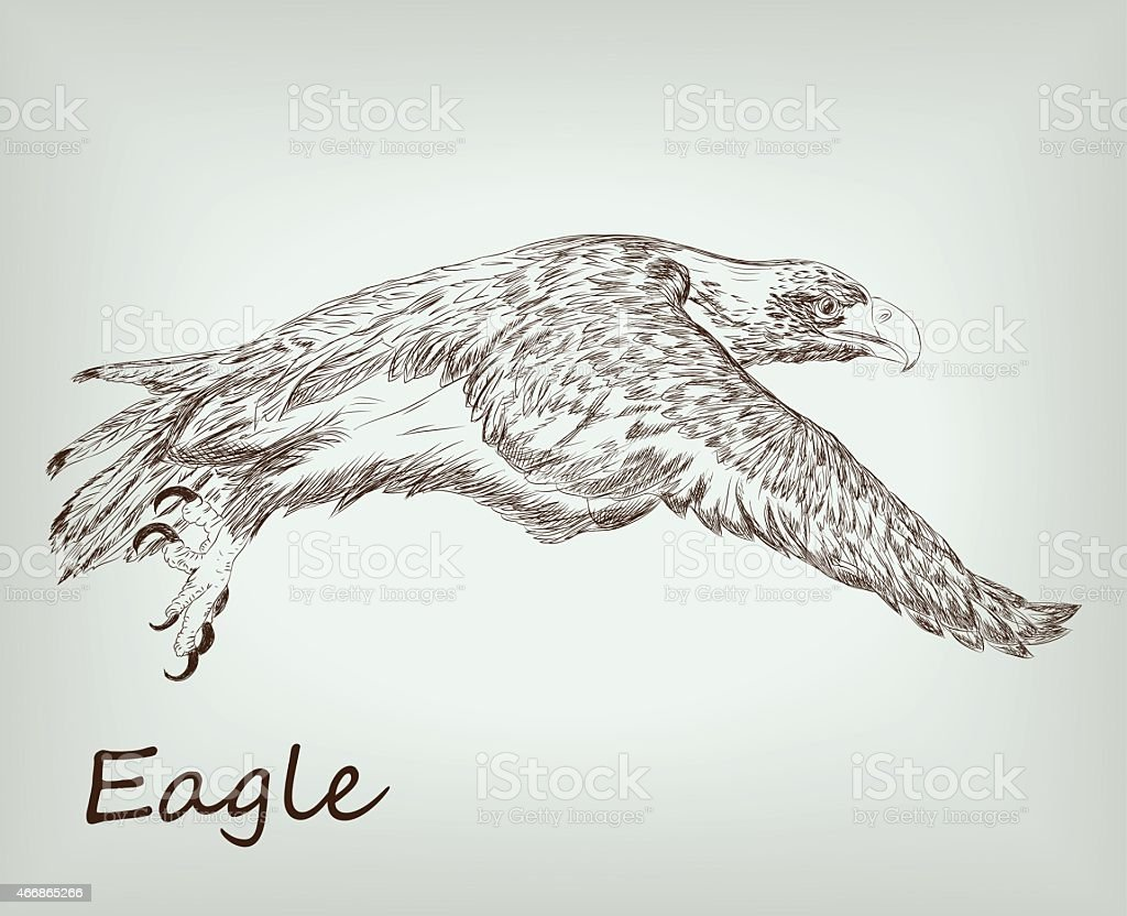 eagle. wild animals. sketches vector art illustration