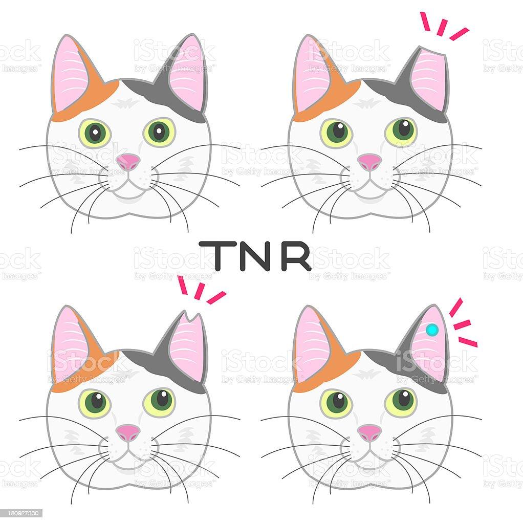 ear cut cat,TNR royalty-free stock vector art