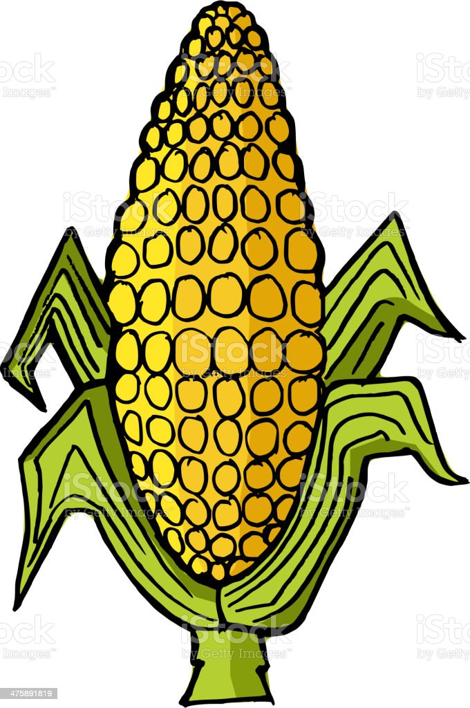 ear of corn vector art illustration