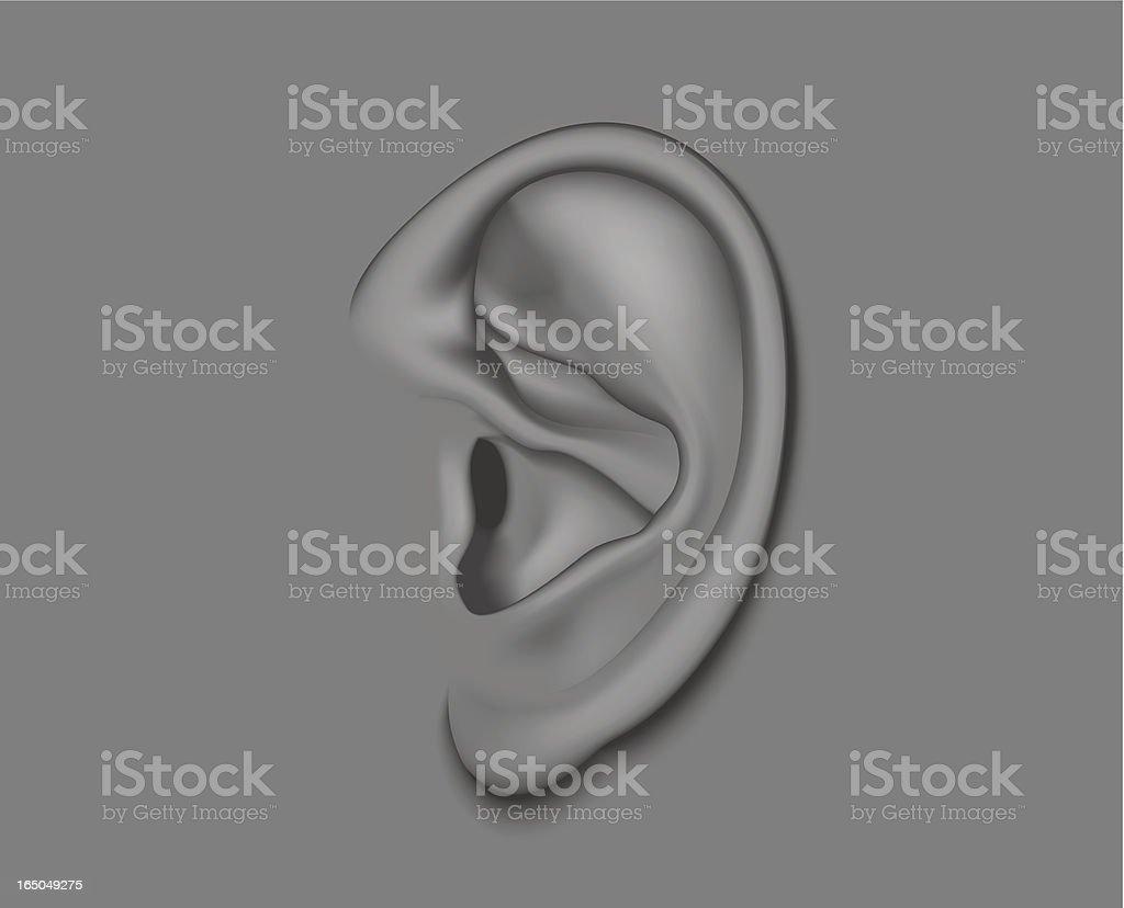 ear vector art illustration