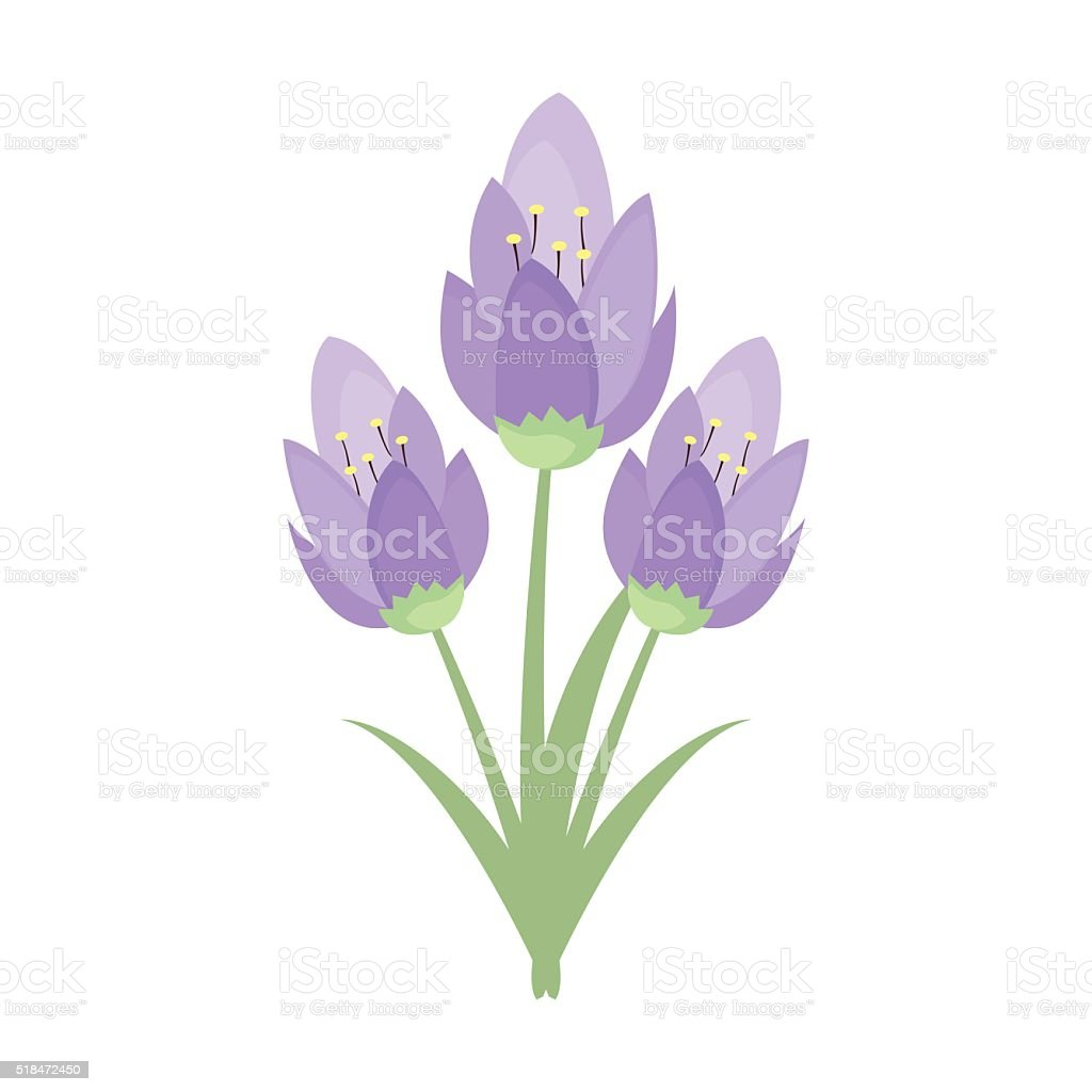 Early spring purple crocus and snowdrops nature beauty flowers vector vector art illustration