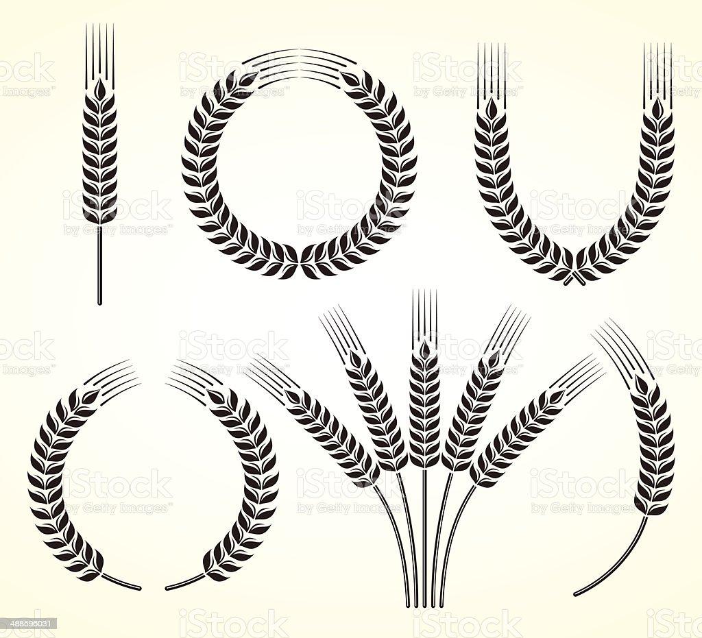 Ears of wheat and rye set. Vector vector art illustration