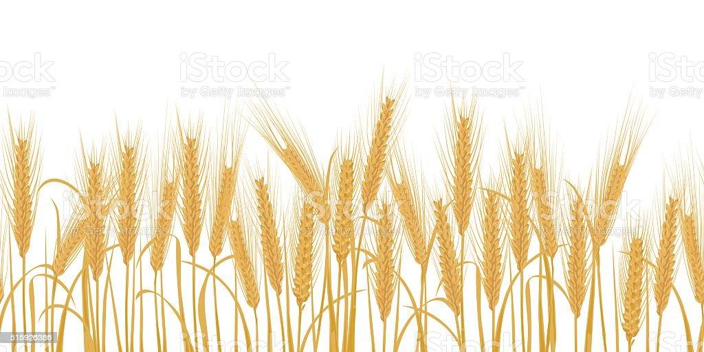 Ears of wheat horizontal border seamless pattern vector art illustration