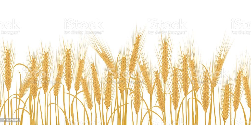 Ears of wheat horizontal border seamless pattern vector art illustration