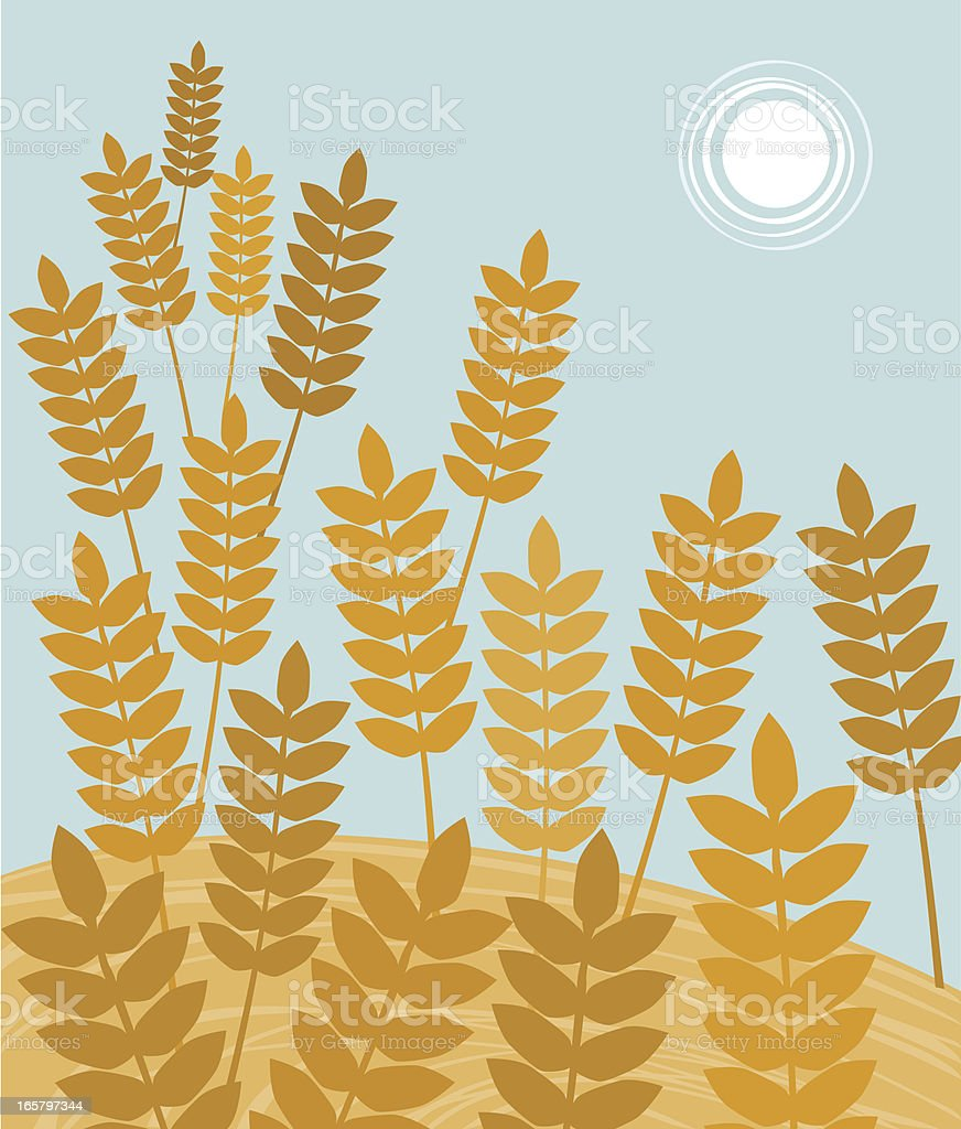 Ears Of Wheat IN Harvesting Time royalty-free stock vector art