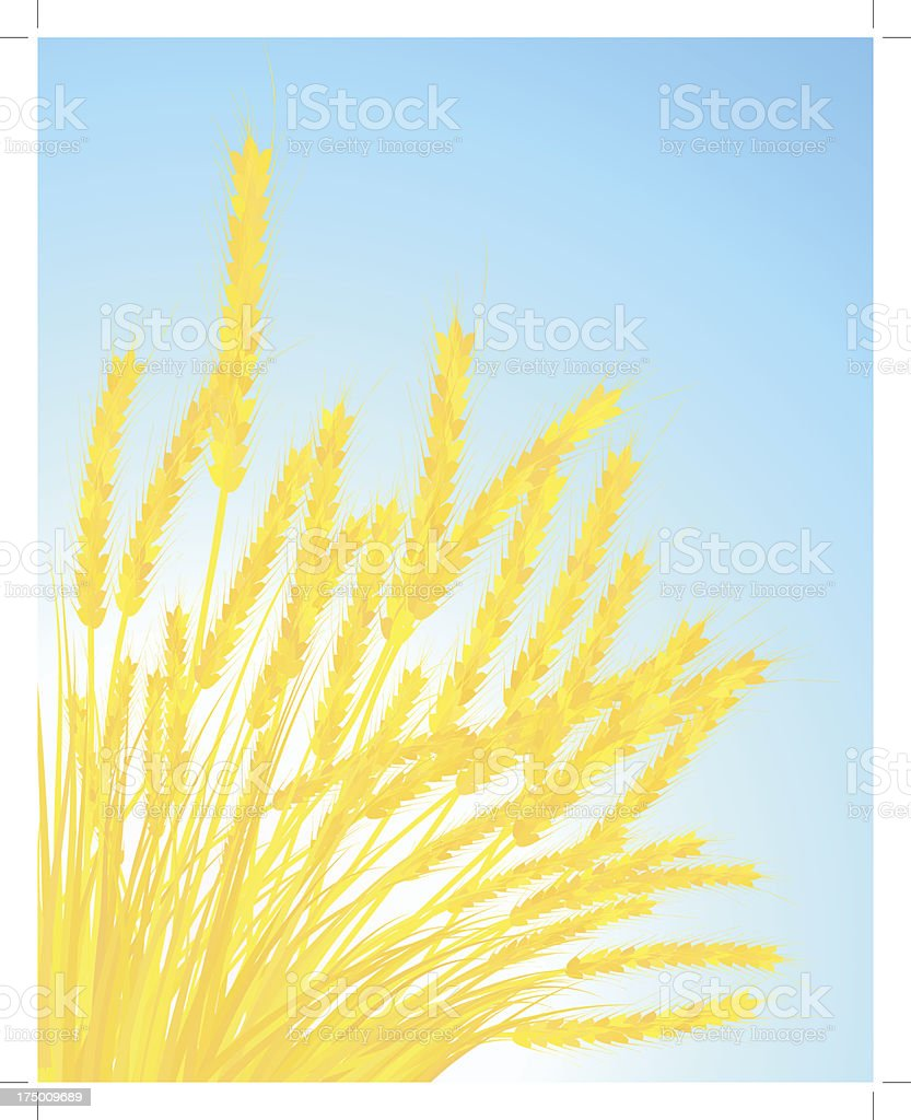 Ears of wheat royalty-free stock vector art