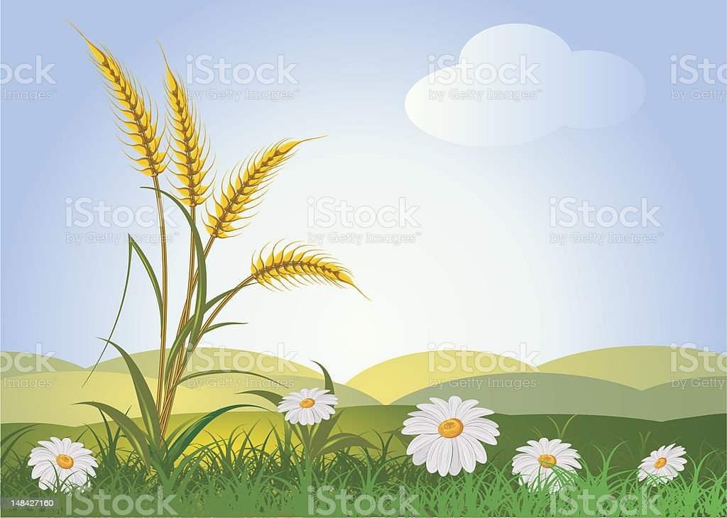 ears of wheat with flowers vector art illustration