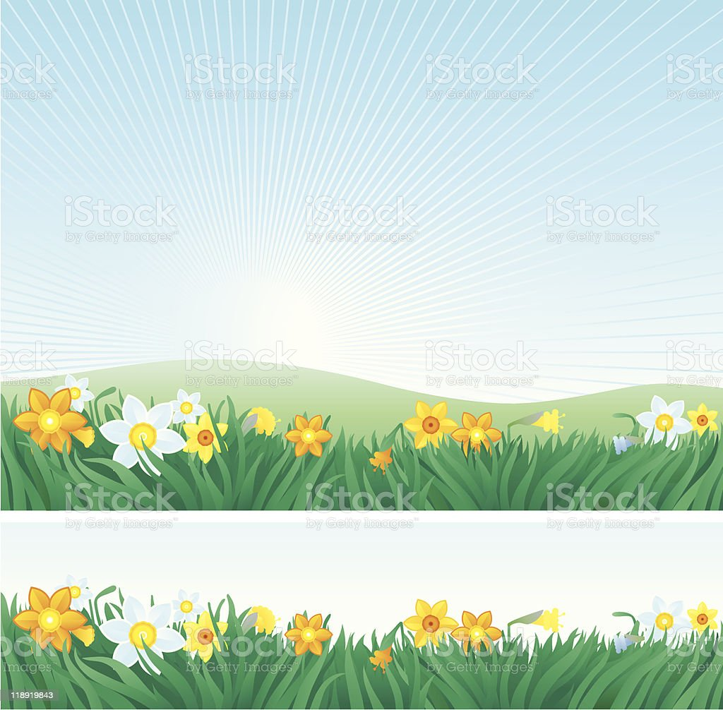 Easter background and banner with daffodils royalty-free stock vector art