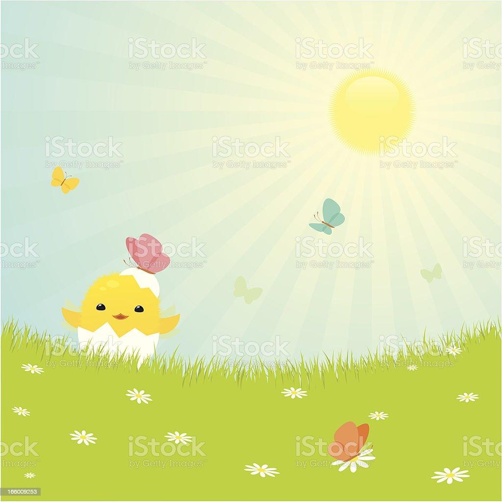 Easter chicken vector art illustration